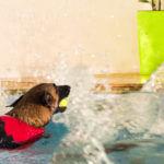 Seehund Hundeschimmen Hundephyiotherapie