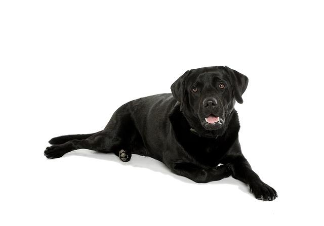 Hund-liegend